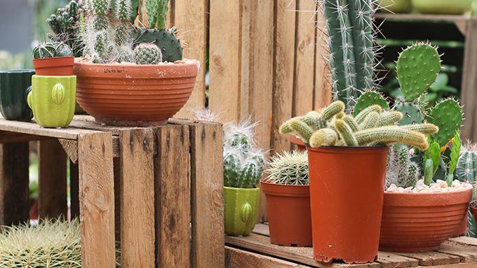 11 Laden In Koln In Denen Ihr Tolle Pflanzen Kaufen Konnt Mit